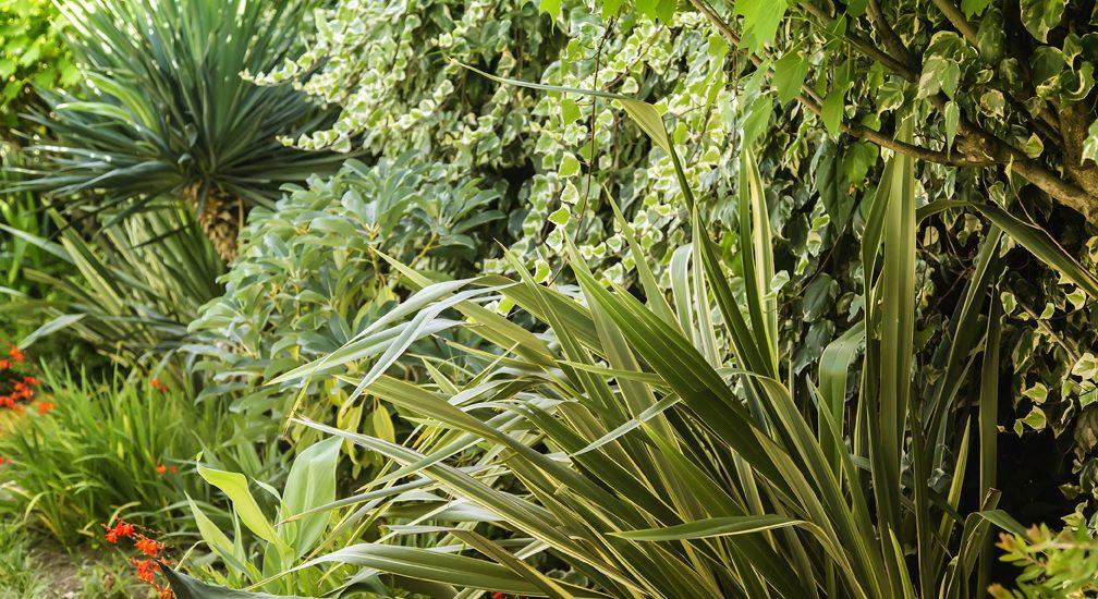 landscape-palms