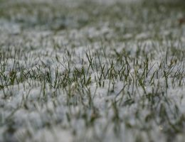 seeding-winter-grass