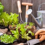 Preparing Spring Vegetable Planting for Gardens